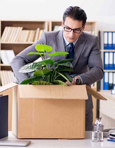 Frusterated business man trying to pack a live plant into a box