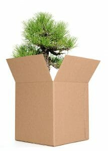 Plant packed in a shipping box